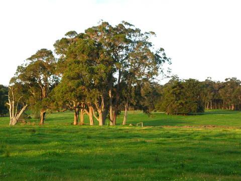 olive-hill-farm