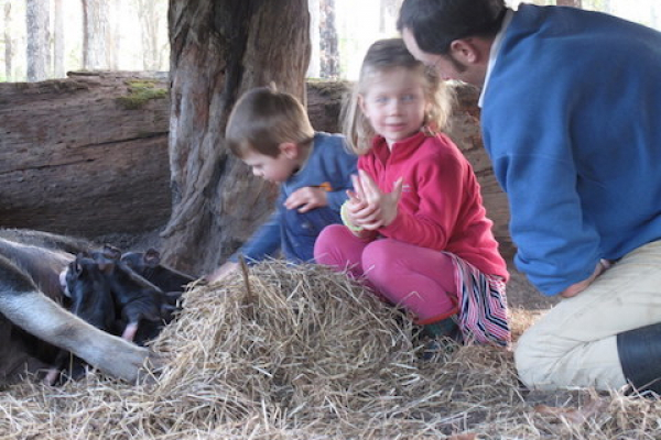 kids-learning-about-animals-at-olive-hill-farm
