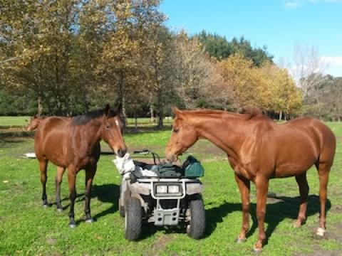 olive-hill-farm-horses
