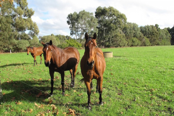 olive-hill-farm-margaret-river-horse-spelling