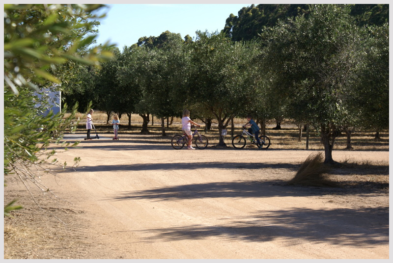 Family-and-Pet-friendly-campground-Margaret-River