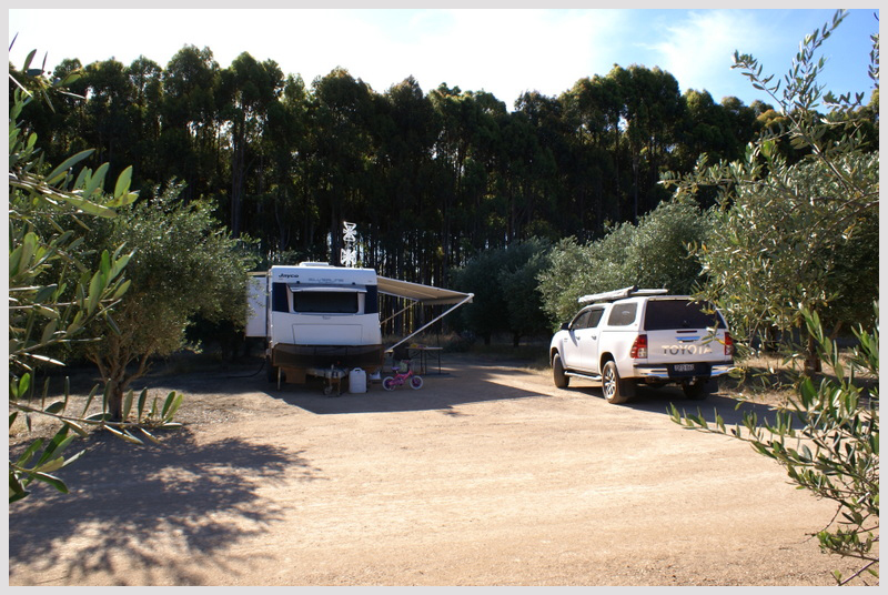Large-camping-bays-at-Olive-Hill-RV-campground-Margaret-River.jpg